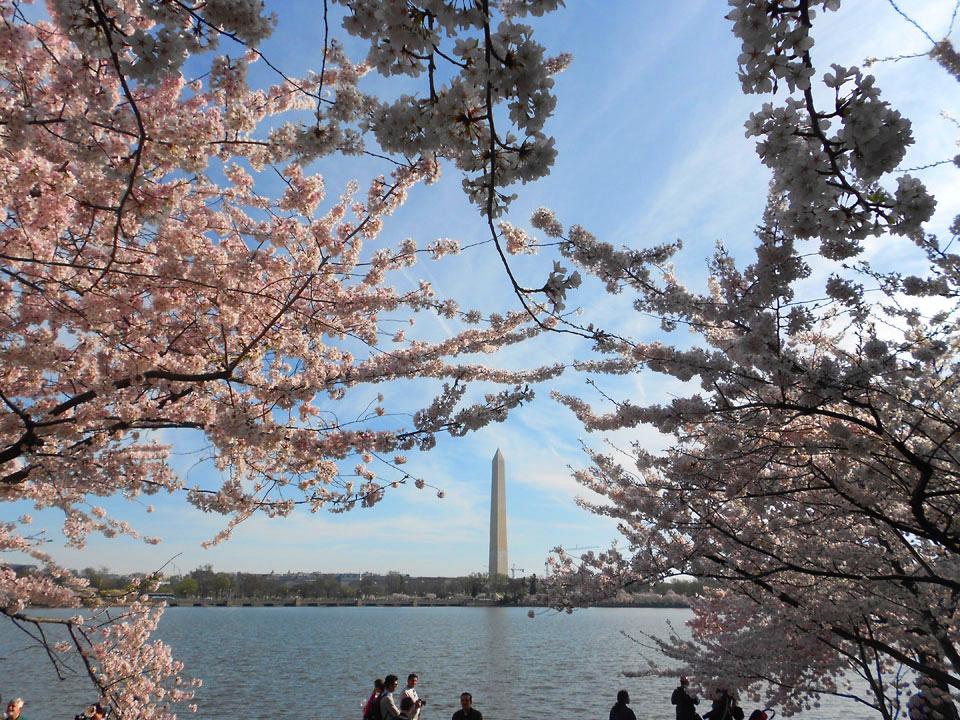 DC_WashingtonMnmntTrees_ACT